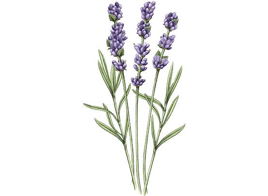 Lavender Foaming Bath Refill | L'Occitane